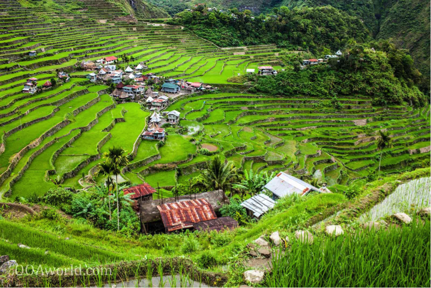 Image of rice feilds in Ubud, Bali, Indonesia